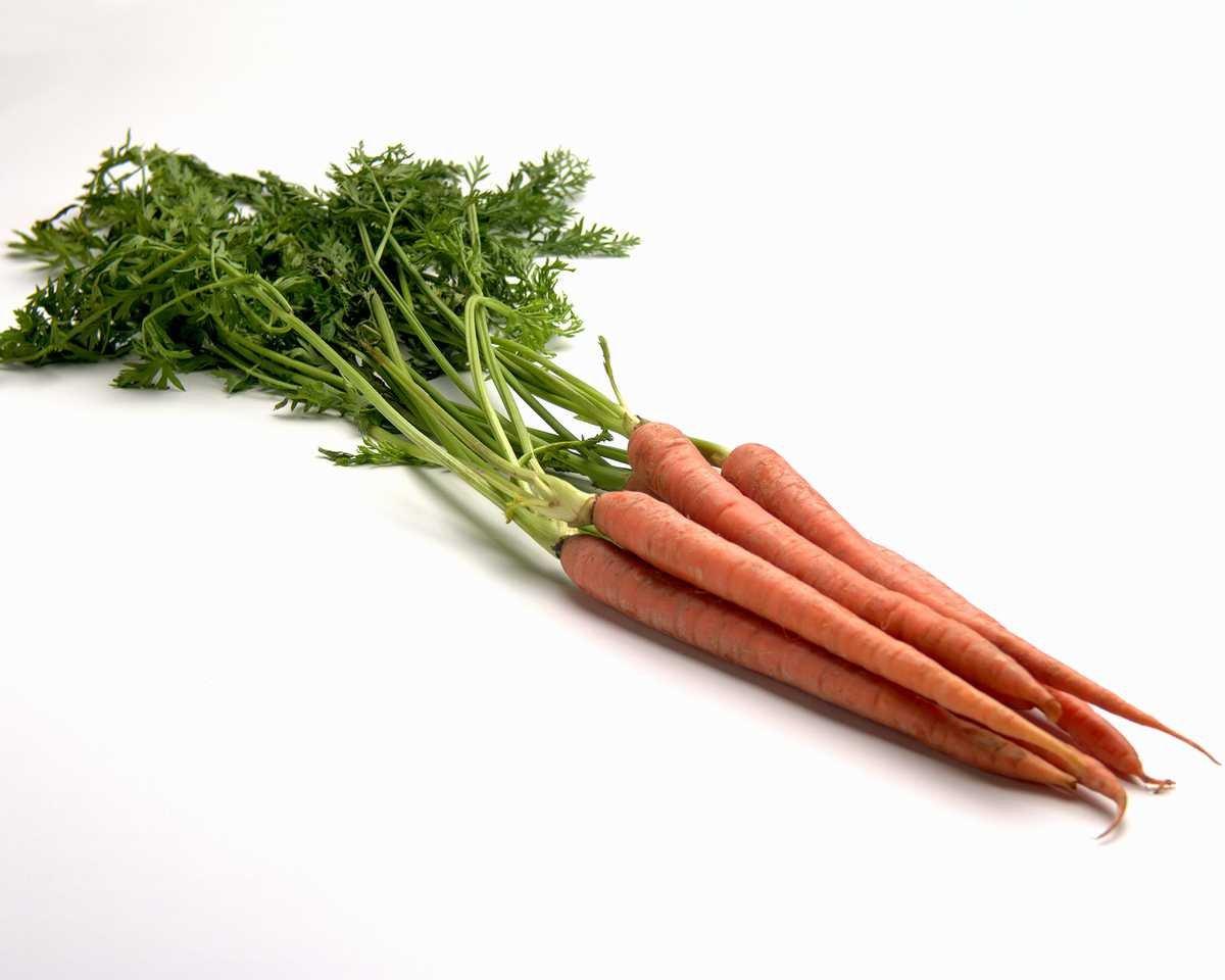 Ein Bund Möhren / Karotten